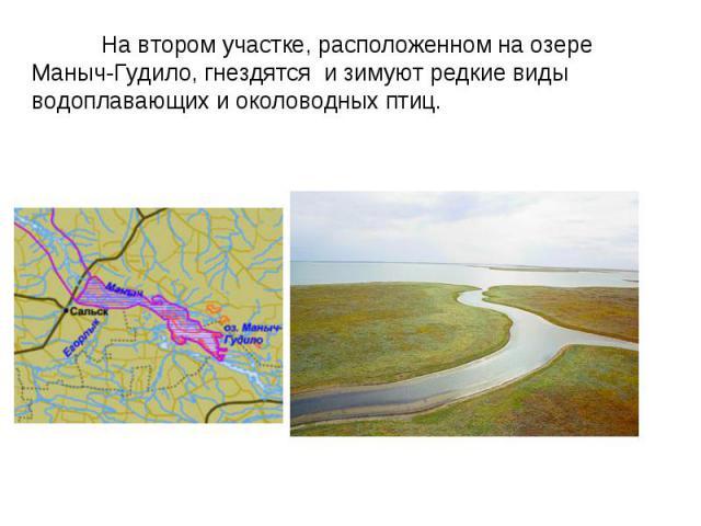 На втором участке, расположенном на озере Маныч-Гудило, гнездятся и зимуют редкие виды водоплавающих и околоводных птиц.