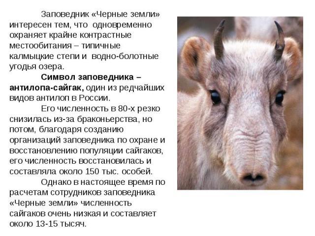 Заповедник «Черные земли» интересен тем, что одновременно охраняет крайне контрастные местообитания – типичные калмыцкие степи и водно-болотные угодья озера. Символ заповедника – антилопа-сайгак, один из редчайших видов антилоп в России. Его численн…