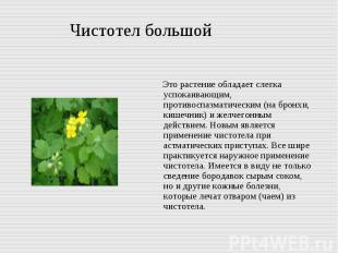 Чистотел большой Это растение обладает слегка успокаивающим, противоспазматическ
