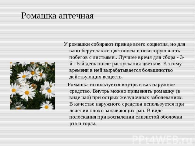 Ромашка аптечная У ромашки собирают прежде всего соцветия, но для ванн берут также цветоносы и некоторую часть побегов с листьями.. Лучшее время для сбора - 3-й - 5-й день после распускания цветков. К этому времени в ней вырабатывается большинство д…