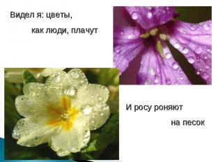Видел я: цветы, как люди, плачутИ росу роняют на песок