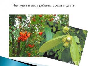 Нас ждут в лесу рябина, орехи и цветы