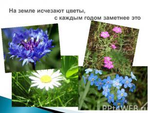 На земле исчезают цветы,с каждым годом заметнее это
