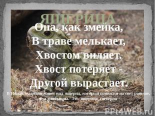 ЯЩЕРИЦАОна, как змейка,В траве мелькает,Хвостом виляет.Хвост потеряет -Другой вы