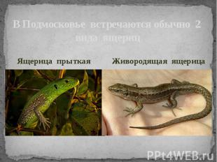 В Подмосковье встречаются обычно 2 вида ящерицЯщерица прыткаяЖивородящая ящерица