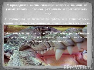 У крокодилов очень сильные челюсти, но они не умеют жевать — только разрывать и