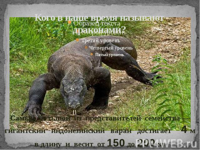 Кого в наше время называют драконами?Самый большой из представителей семейства — гигантский индонезийский варан достигает 4 м в длину и весит от 150 до 200 кг