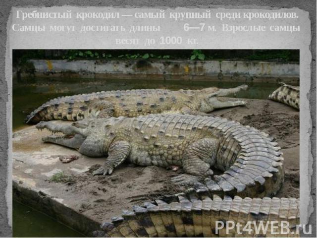 Гребнистый крокодил — самый крупный среди крокодилов. Самцы могут достигать длины 6—7 м. Взрослые самцы весят до 1000 кг.