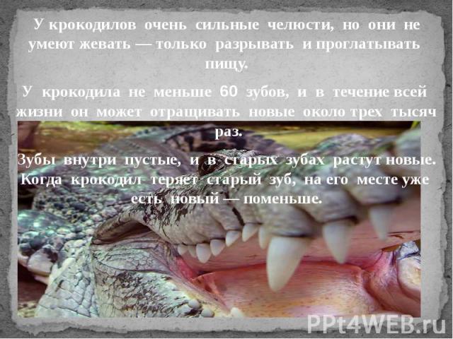 У крокодилов очень сильные челюсти, но они не умеют жевать — только разрывать и проглатывать пищу.У крокодила не меньше 60 зубов, и в течение всей жизни он может отращивать новые около трех тысяч раз.Зубы внутри пустые, и в старых зубах растут новые…