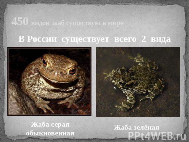 450 видов жаб существует в миреВ России существует всего 2 видаЖаба серая обыкновеннаяЖаба зелёная