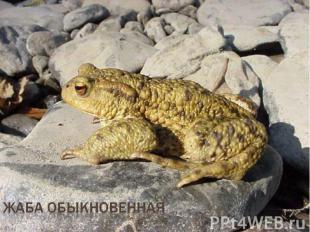 жаба обыкновенная