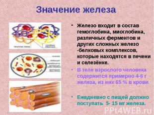 Значение железаЖелезо входит в состав гемоглобина, миоглобина, различных фермент