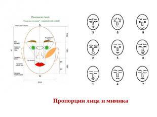 Пропорции лица и мимика