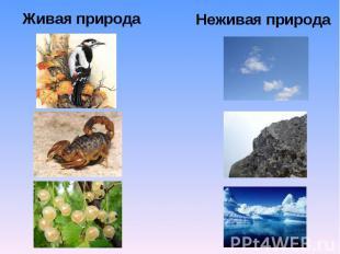 Живая природаНеживая природа