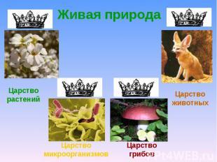 Живая природаЦарство растенийЦарство животныхЦарство микроорганизмовЦарство гриб