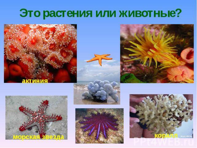 Это растения или животные?