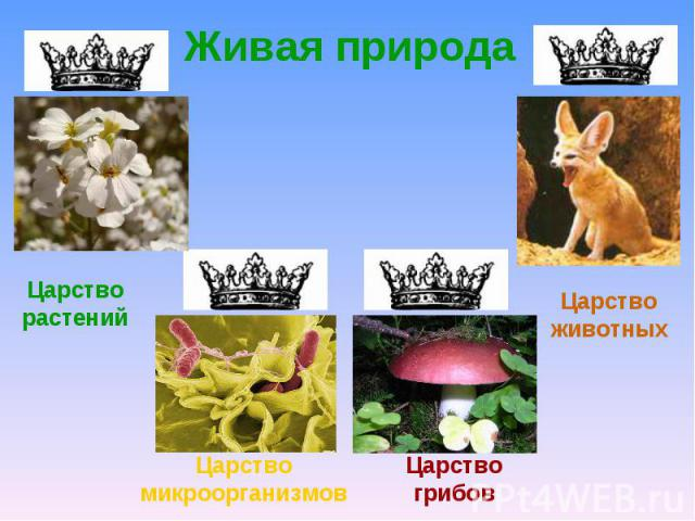 Живая природаЦарство растенийЦарство животныхЦарство микроорганизмовЦарство грибов