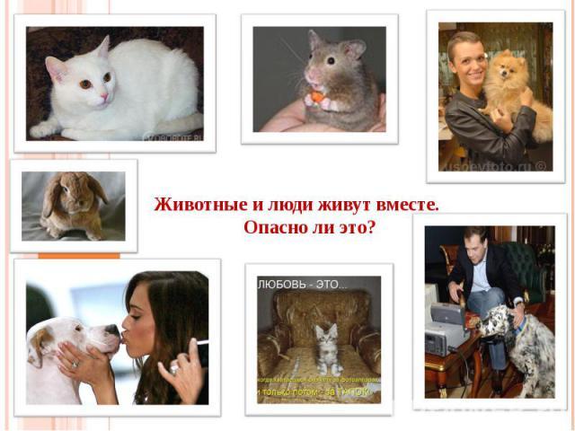 Животные и люди живут вместе. Опасно ли это?