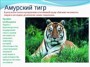 Амурский тигрВ результате охоты и разрушения естественной среды обитания численн