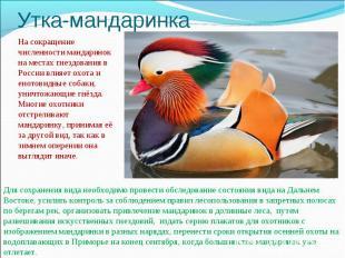 Утка-мандаринкаНа сокращение численности мандаринок на местах гнездования в Росс