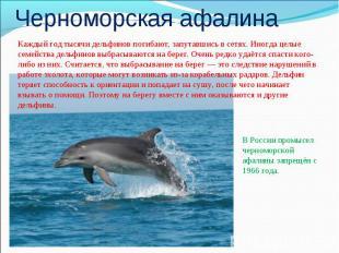 Черноморская афалинаКаждый год тысячи дельфинов погибают, запутавшись в сетях. И