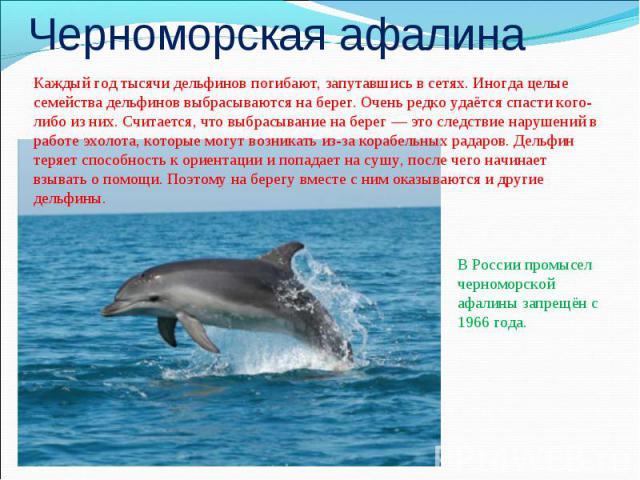 Черноморская афалинаКаждый год тысячи дельфинов погибают, запутавшись в сетях. Иногда целые семейства дельфинов выбрасываются на берег. Очень редко удаётся спасти кого-либо из них. Считается, что выбрасывание на берег— это следствие нарушений в раб…