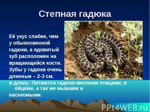 Степная гадюкаЕё укус слабее, чему обыкновеннойгадюки, а ядовитыйзуб расположен