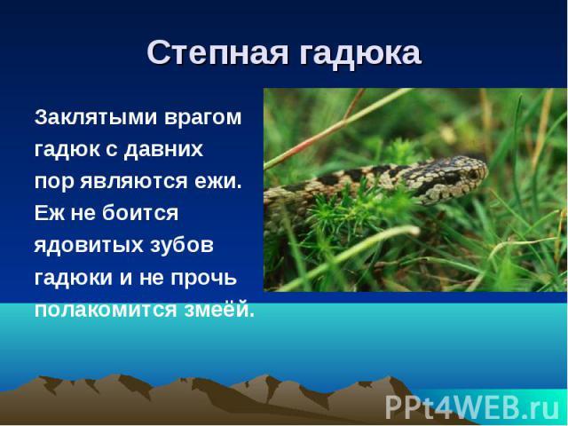 Степная гадюкаЗаклятыми врагомгадюк с давнихпор являются ежи.Еж не боится ядовитых зубов гадюки и не прочьполакомится змеёй.