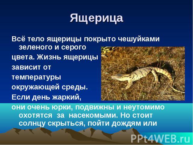 ЯщерицаВсё тело ящерицы покрыто чешуйками зеленого и серого цвета. Жизнь ящерицызависит от температурыокружающей среды.Если день жаркий,они очень юрки, подвижны и неутомимо охотятся за насекомыми. Но стоит солнцу скрыться, пойти дождям или