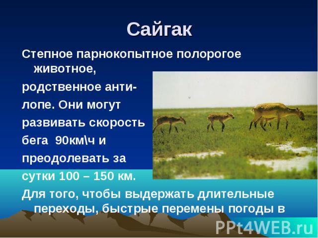 СайгакСтепное парнокопытное полорогое животное,родственное анти-лопе. Они могутразвивать скорость бега 90км\ч и преодолевать засутки 100 – 150 км.Для того, чтобы выдержать длительные переходы, быстрые перемены погоды в