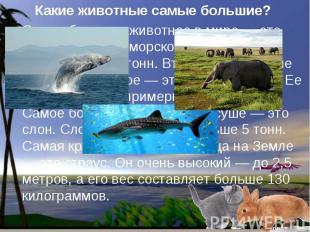 Какие животные самые большие? Самое большое животное в мире — это кит. Кит живет