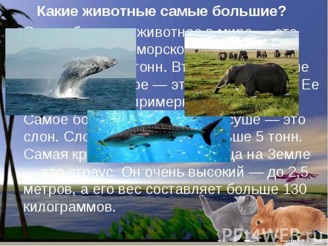 Какие животные самые большие? Самое большое животное в мире — это кит. Кит живет в морской воде. Его вес составляет 150 тонн. Второе по величине морское животное — это китовая акула. Ее вес составляет примерно 12-14 тонн. Самое большое животное на с…