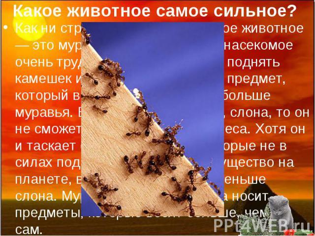 Какое животное самое сильное? Как ни странно, но самое сильное животное — это муравей. Это маленькое насекомое очень трудолюбиво. Оно может поднять камешек или какой-либо другой предмет, который весит в пятьдесят раз больше муравья. Если взять, к пр…