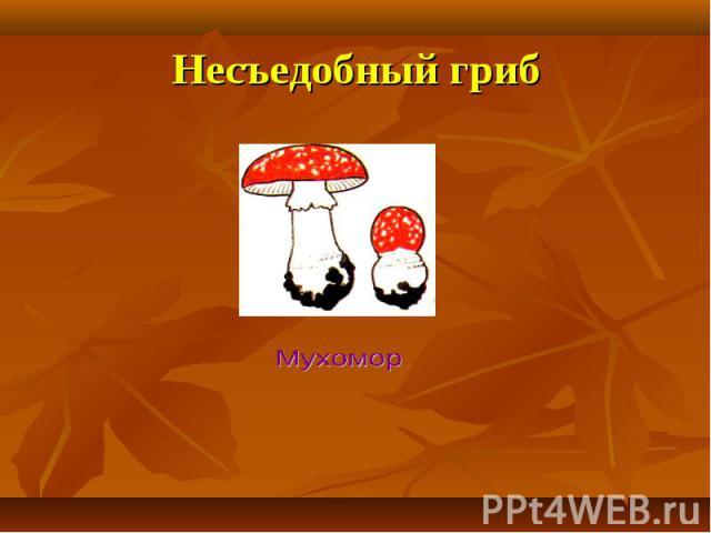 Несъедобный гриб Мухомор
