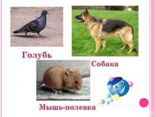 Голубь Собака Мышь-полевка