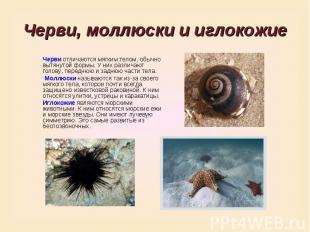Черви, моллюски и иглокожиеЧерви отличаются мягким телом, обычно вытянутой формы