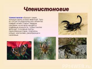 ЧленистоногиеЧленистоногие образуют самую большую группу из всех животный. Тело