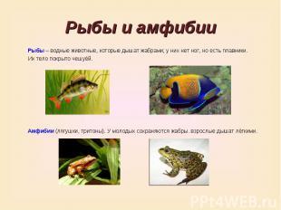 Рыбы и амфибииРыбы – водные животные, которые дышат жабрами; у них нет ног, но е