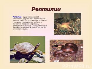 РептилииРептилии – одни из них имеют конечности, другие - нет. Большинство имеет