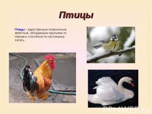 ПтицыПтицы – единственные позвоночные животные, обладающие крыльями из перьев и