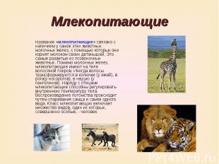 Млекопитающие Название «млекопитающие» связано с наличием у самок этих животных