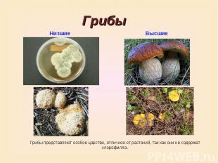 ГрибыНизшиеВысшиеГрибы представляют особое царство, отличное от растений, так ка