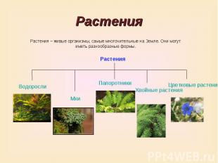 РастенияРастения – живые организмы, самые многочительные на Земле. Они могут име