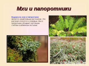 Мхи и папоротники Водоросли, мхи и папоротники являются нецветковыми растениями.