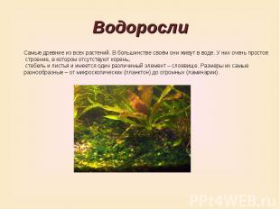 ВодорослиСамые древние из всех растений. В большинстве своём они живут в воде. У