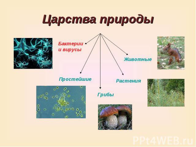 Царства природы Бактерии и вирусы Животные Простейшие Грибы Растения