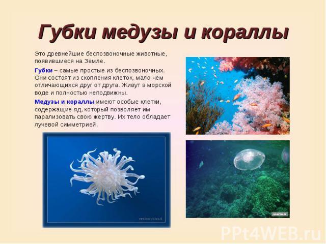 Губки медузы и кораллыЭто древнейшие беспозвоночные животные, появившиеся на Земле.Губки – самые простые из беспозвоночных. Они состоят из скопления клеток, мало чем отличающихся друг от друга. Живут в морской воде и полностью неподвижны.Медузы и ко…