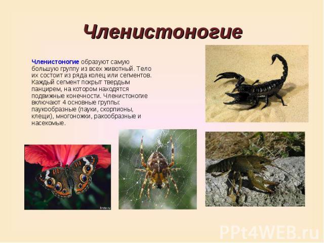 ЧленистоногиеЧленистоногие образуют самую большую группу из всех животный. Тело их состоит из ряда колец или сегментов. Каждый сегмент покрыт твердым панцирем, на котором находятся подвижные конечности. Членистоногие включают 4 основные группы: паук…