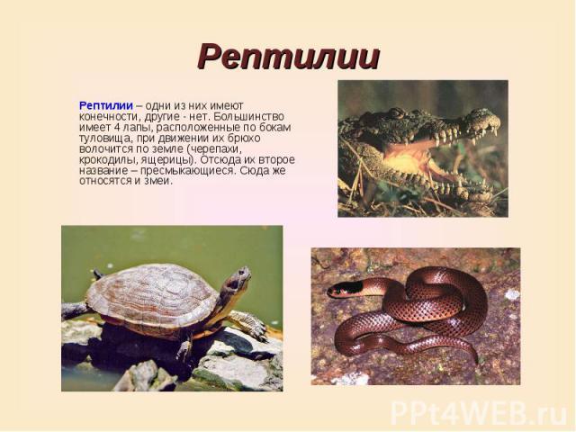 РептилииРептилии – одни из них имеют конечности, другие - нет. Большинство имеет 4 лапы, расположенные по бокам туловища, при движении их брюхо волочится по земле (черепахи, крокодилы, ящерицы). Отсюда их второе название – пресмыкающиеся. Сюда же от…