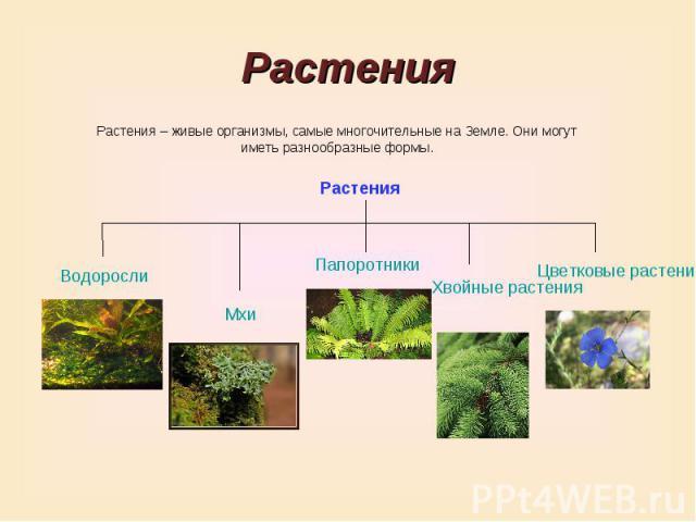 РастенияРастения – живые организмы, самые многочительные на Земле. Они могут иметь разнообразные формы.